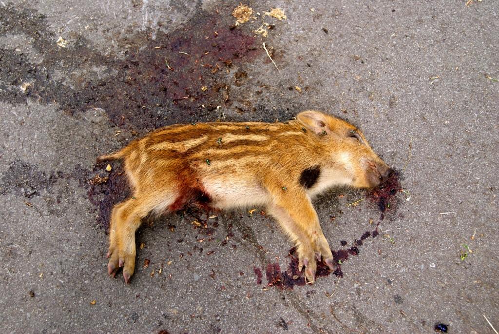 Une victime de plus sur les routes!