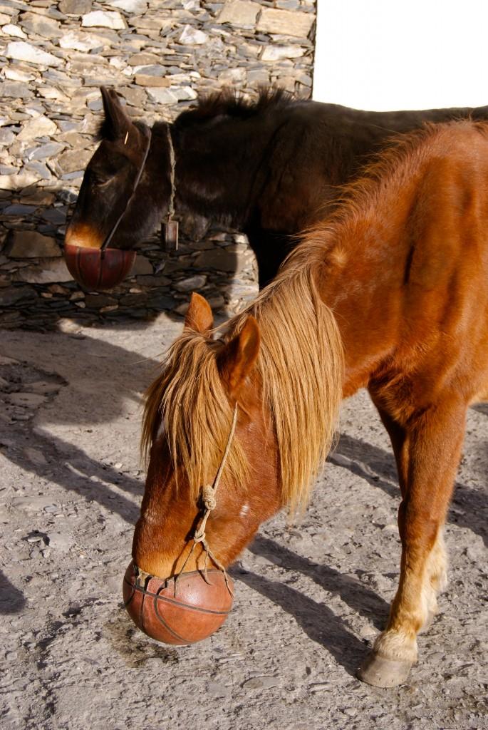 Manière pratique de nourrir les chevaux