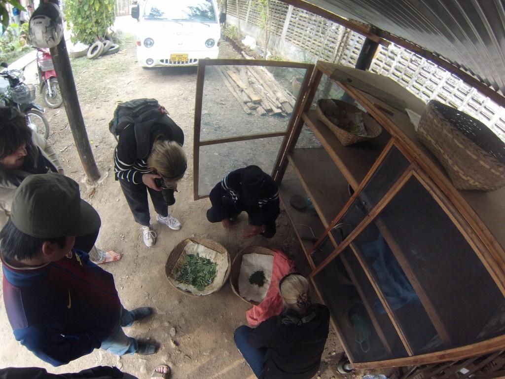 Cours accéléré de production de soie