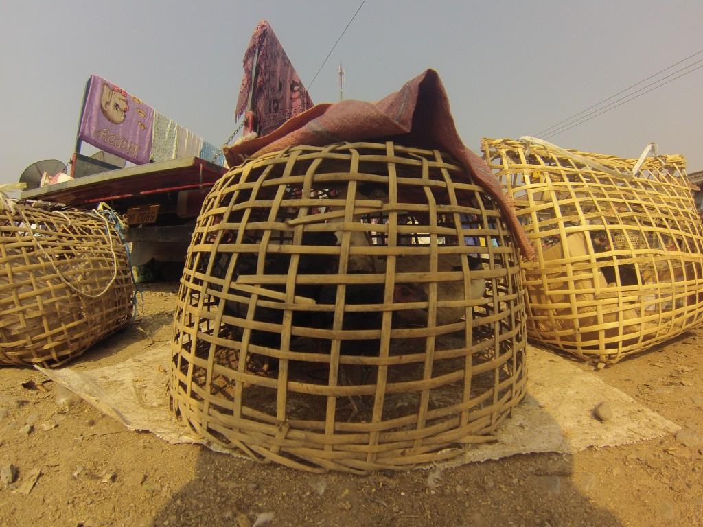 Canard en cage sur un marché locale