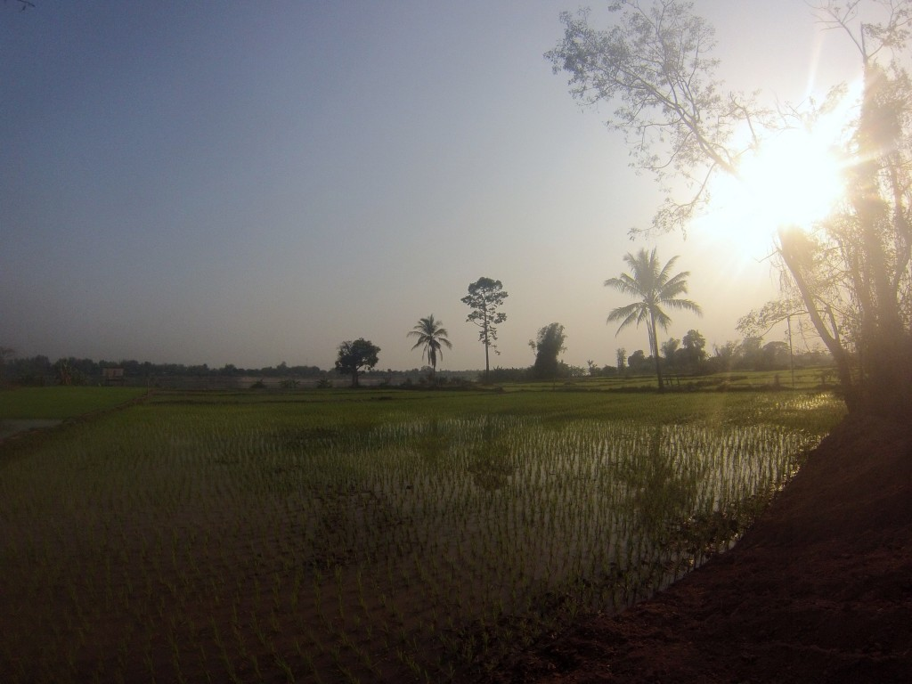 Rizière au soleil couchant