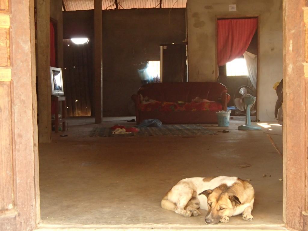 Chien sur le seuil d'une demeure laotienne  (crédit photos Sandra Gilles)